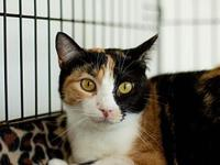 My story Trisket is a sweet and shy little girl