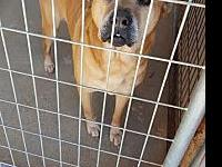 Trix's story Trix is kennel aggressive and may bite