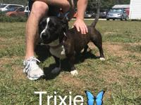 Hi! I'm Trixie! I'm about 2 years old and 38 lbs. I was