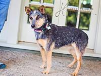TRIXIE's story  TRIXIE Female 4 years & AVAILABLE - for