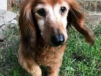 Trixie's story Trixie Senior (14yrs) Dachshund, Female,