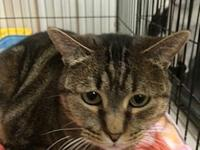 Trixie's story Trixie is a 6  year old female striped