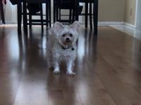 Trixie Grace is a 4 year old Yorkie/Maltese mix. She's