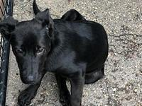 Trixie's story Trixie is a cute 3-4 month old pup. She