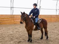 Trixie is an adorable big-bodied 13 hh, 16 year old
