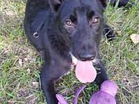 Trixie's story Trixie is a 6-month-old shepherd mix