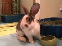 Trooper is a big, energetic rabbit who wants to explore
