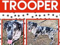 Trooper's story Trooper came to the Rescue when he was