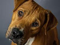 My story My name is Trooper. I'm a 48 lb Male Pit mix
