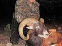 Texas Trophy Sheep or Ibex X Hunt $1500 per person ----