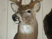 I have 7 Trophy Whitetail Deer mounts that I would like