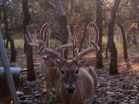 Trophy Whitetail Hunts - Fredericksburg, TX Come take