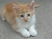 Troup's story Meow! My name is Troup and I am a male
