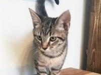 Troy's story Troy: shorthaired tabby Hi! My name is
