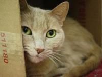 Trudy's story Trudy here! I am an extra sweet girl that