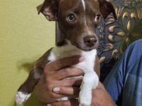 My story Her adoption fee is $250 and includes her