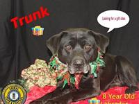 Trunk's story You can fill out an adoption application