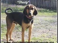 1803060 - Trusty - young adult mixed breed approx 2 yrs