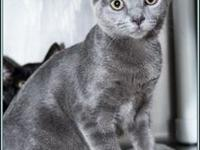 TSUNAMI's story $97.50 FEE INCLUDES: neutering/spaying,