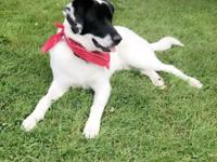 Tubbs is a 1 year old border collie mix who needs a new