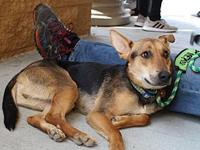 Tuck's story Tuck is a 1 year old shepherd mix who