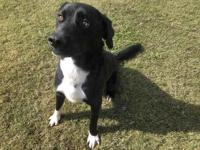 TUCKER's story This animal was surrendered to the