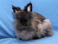 Tuffty is an adorable Lionhead mix bunny who came to