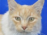 Tuffy's story I'm Tuffy, a 5 year old indoor/outdoor