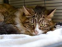 Tuffy's story Tuffy lived with a lady with allergies;