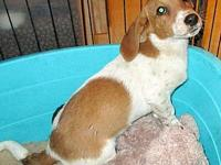 Tug's story CUTE AS A BUTTON! We think Tug is a mix of