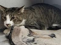 Tuggy's story Meet Tuggy! He is a 4 year old cat with