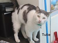 Tulie's story Curious and cuddly is Tulie. He was found