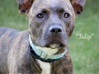 Tulip's story Tulip is a very sweet, gentle gal that