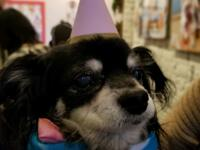 Hi there I am Tulip - ,a VERY sweet senior, I am