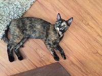 Tulip's story Hi. I am Tulip. I was found living with