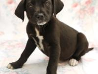 Tulip is a lab mix puppy whose birthday is February 4,