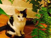 Tulsi's story Tulsi is presently living in a foster