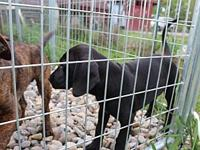 Tumbleweed's story need fenced yard for safety of the