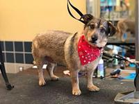 Turbo $300's story Hes a 3 year old, 20lb, terrier mix.