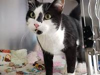 Turbo's story Turbo is a handsome 4 year old male