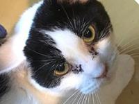 Turnip's story Turnip is a mild-mannered, affectionate,