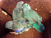 I have four Turquoise Blue (i.e., turquoise tinted