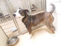 Animal ID: 27795723 Age: 2 years 26 days Size: Large