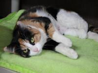 Tuta is a 1-year-old calico with a short coat. She was