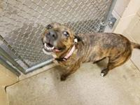 Tutti *Petsmart GB*'s story Terrier/Mix,Brindle 4 years