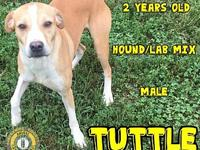 Tuttle's story You can fill out an adoption application