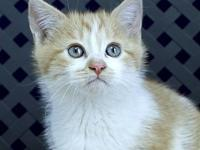 Tuttlebee's story Primary Color: Orange Tabby Secondary