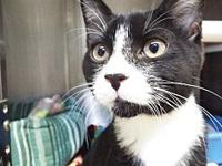 Tux's story My name is Tux. I am very friendly, have a
