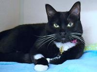 TUX's story BLACK AND WHITE DELIGHT Favorite Things: