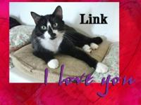 Tuxedo - Jester - Medium - Young - Male - Cat Jester is